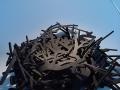 Nest - 2004